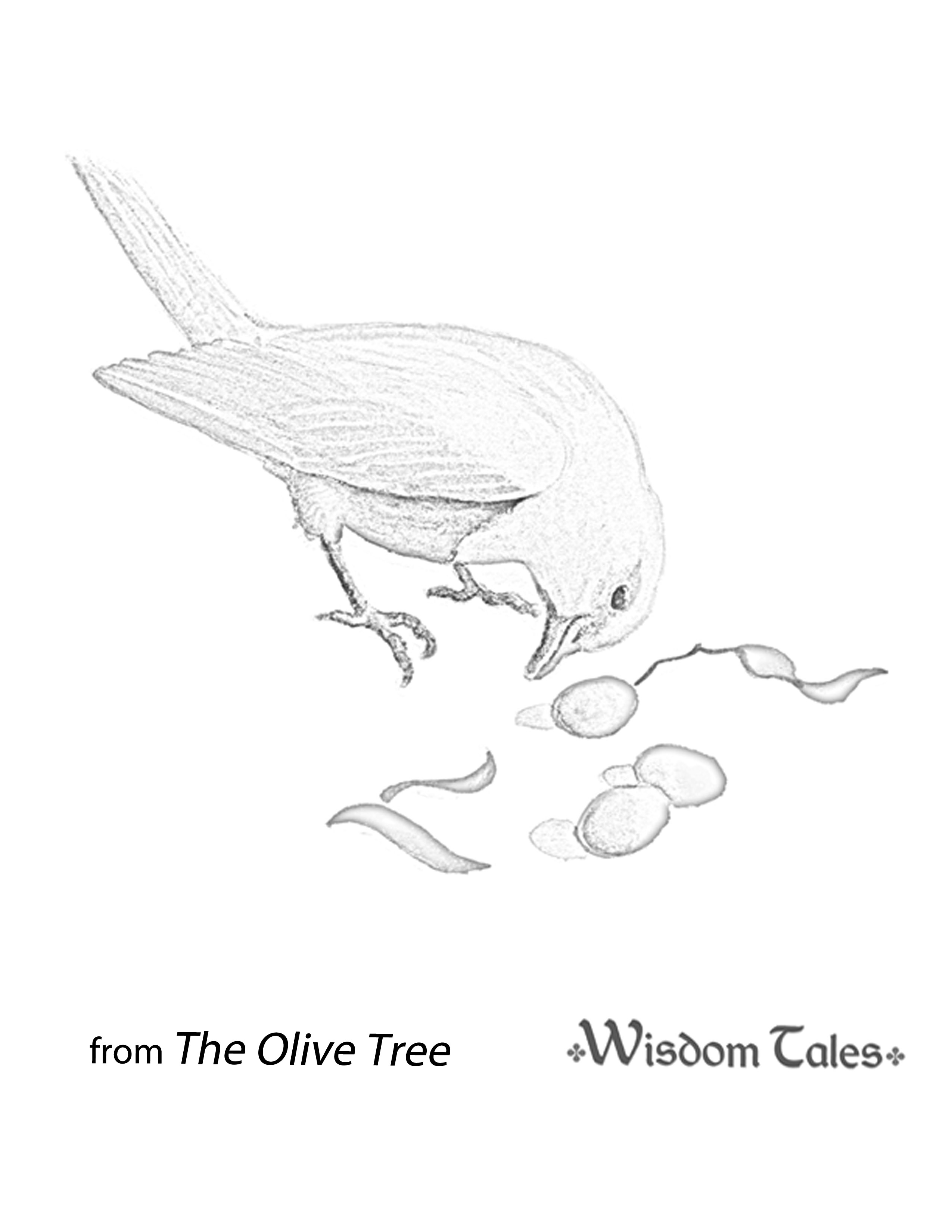 olive tree coloring page - the olive tree isbn 978 1 937786 29 8 by elsa martson